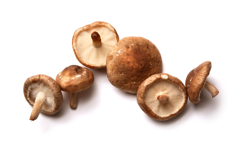 Shitaake Mushrooms